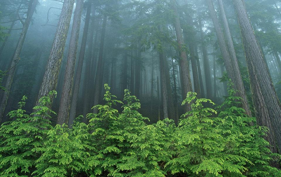 forestBG